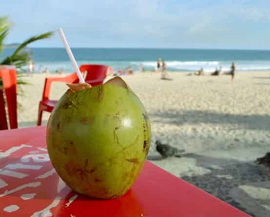 Coconut at the Beach